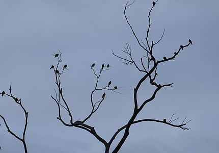 birds, shadows, observed, branches