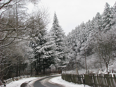 winter, pine, forest, forest road, nature