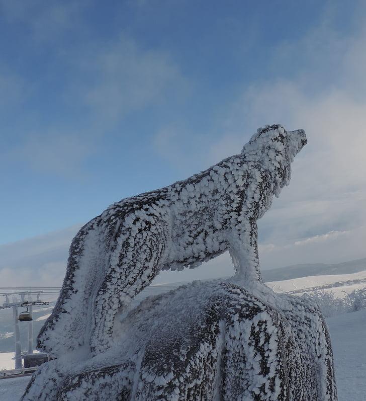 llop, gel, Fichtelberg, neu, l'hivern
