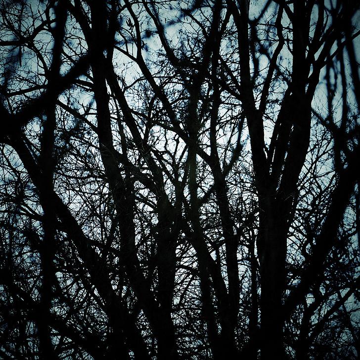puud, Sügis, hooaja, sügisel, filiaali, metsa, loodus