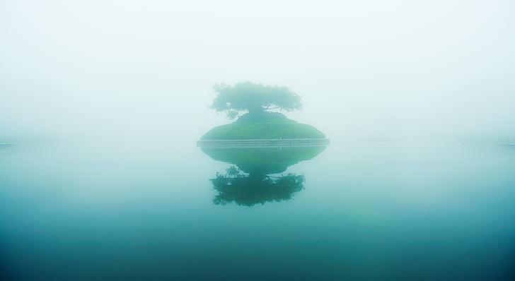 Jezioro, mgła, drzewo życia, drzewo, Wyspa