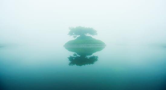 Lago, nebbia, l'albero della vita, un albero, Isola