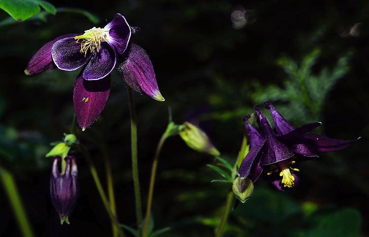flor, flors, porpra, color fort, macro