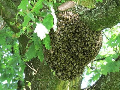 rusc, eixam, abelles, insecte, natura, l'estiu, arbre