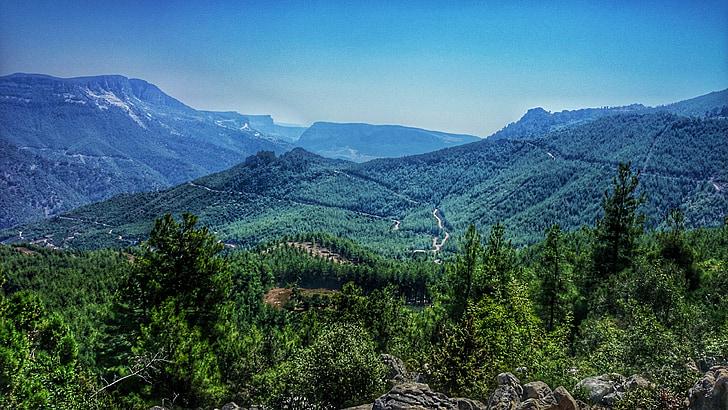 loodus, maastik, metsa, Myrtle, Türgi, puu, puud