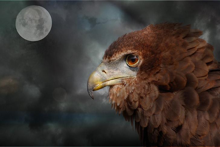 раптор, Адлер, бил, Луната, мрачен, облаците