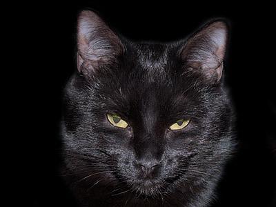 cat, black, feline, animal, eyes, cat eyes