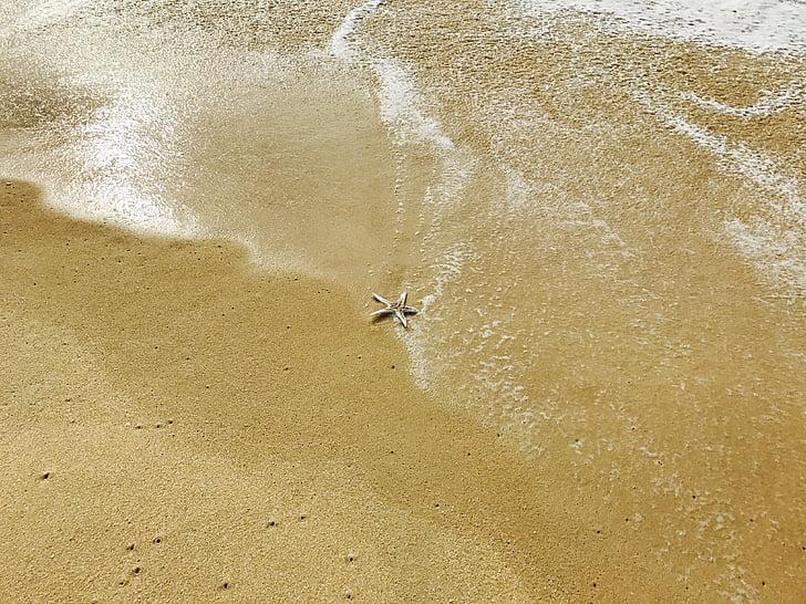 estrella, Mar, platja, l'aigua, l'estiu, natura, oceà