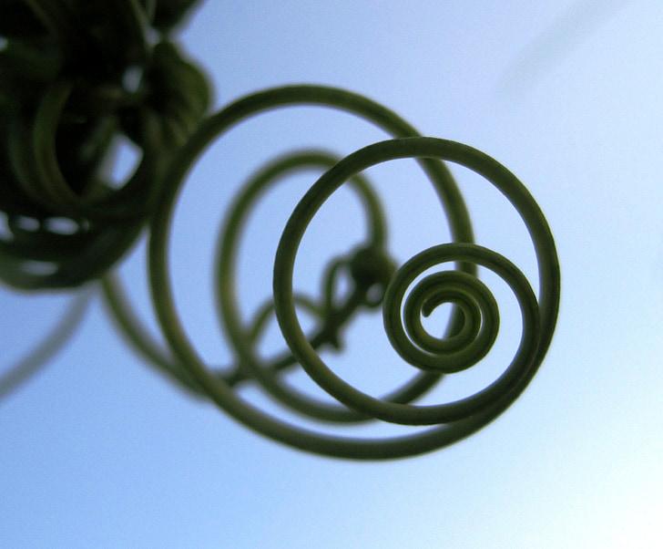 Tua của nho, nhà leo núi, xoắn ốc, thực vật, màu xanh lá cây, vòng tròn, đồng tâm