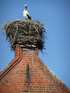 stork, nest, bird, birds