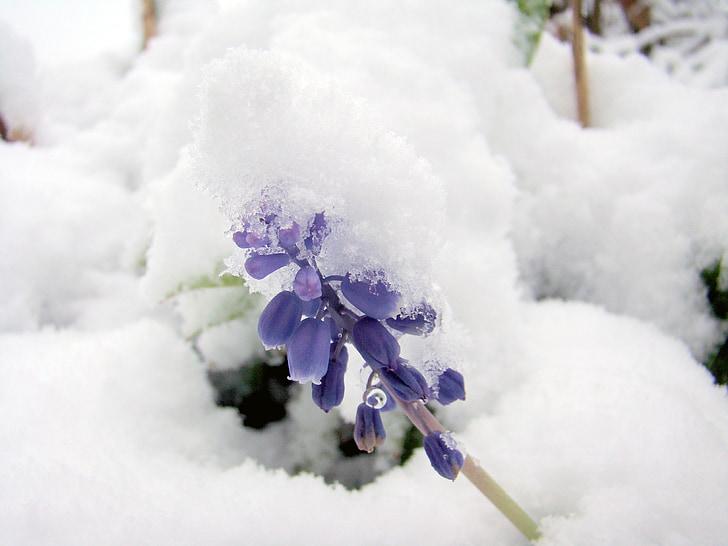 snow, winter, cold, flower, frozen, nature, cold - Temperature