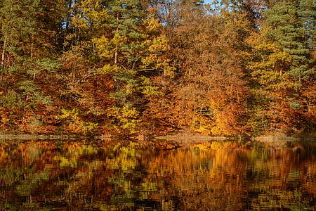 sonbahar yaprakları, Göl, yansıtma, Sonbahar, su, yaprakları, sonbahar renk