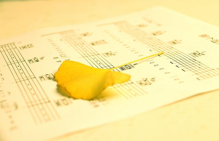 tablature, Ginkgo biloba, silts, fotogrāfija