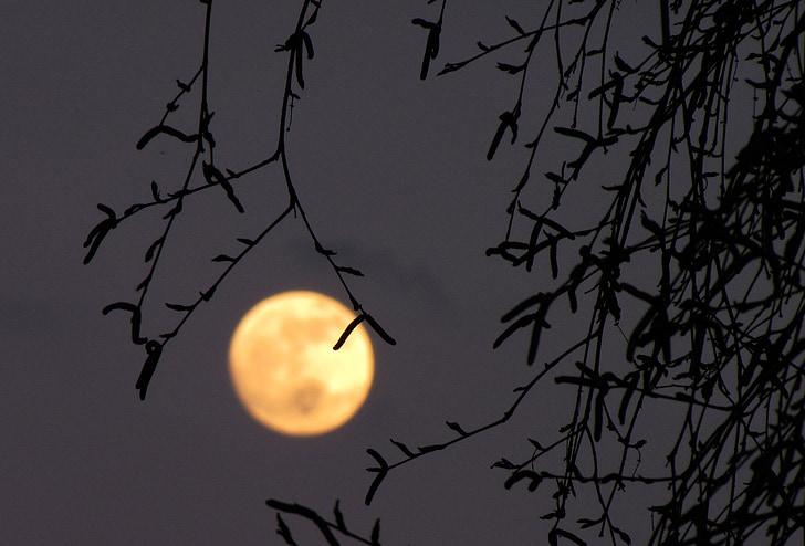 Lluna plena, Lluna, bedoll, capvespre