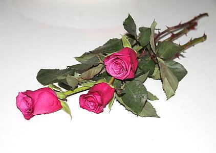 Roses, tres, roses vermelles, flors, vermell, l'amor, fons