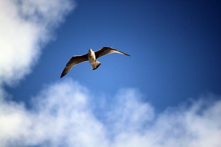 lintu lennon, Sea bird, luonnonvaraisten lintujen