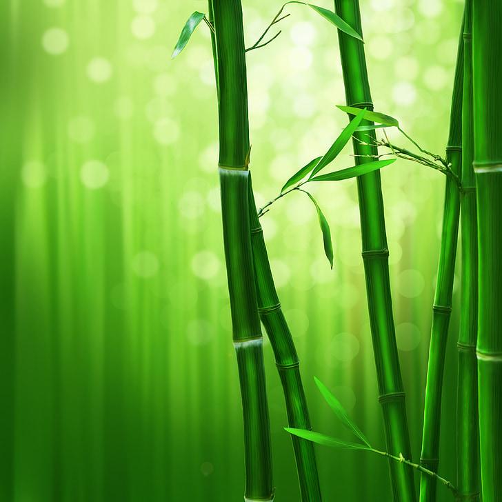 Bambu, Yeşil, doğa, Bambu - bitki, yeşil renk, bitki, yaprak