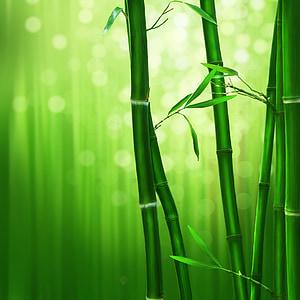 bambú, verd, natura, bambú - planta, color verd, planta, fulla