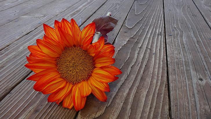 άνθιση, άνθος, χλωρίδα, λουλούδι