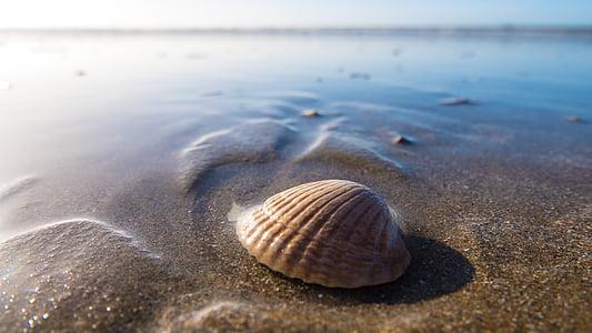 closca, al costat del mar, vora del mar, platja, closca, Mar, sorra