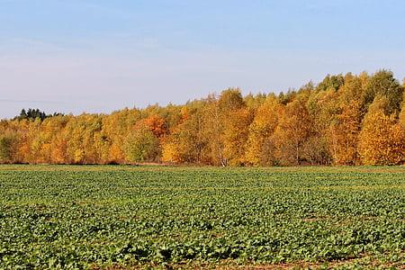 sonbahar renkleri, ağaçlar, sonbahar renk, Altın sonbahar, Orman, sonbahar ruh hali
