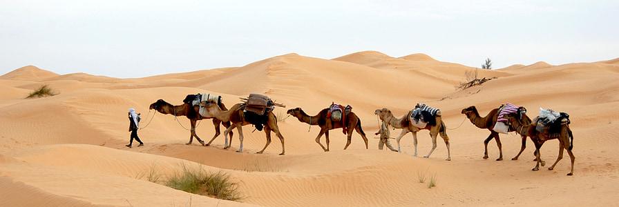 Tunisia, sa mạc, Caravan, Cát, sa mạc Sahara, người Bedouin, lạc đà