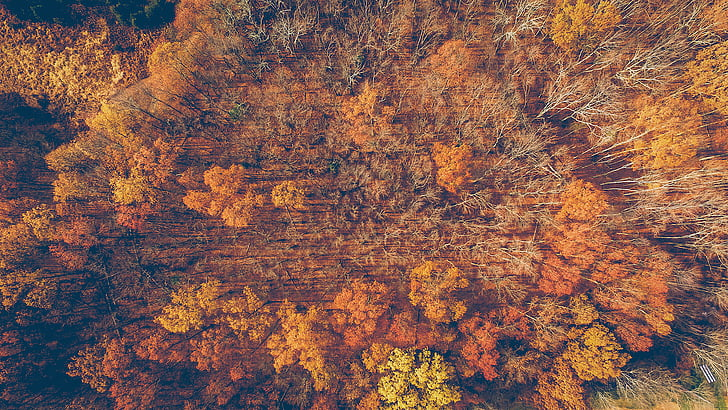 nature, trees, woods, autumn, orange, forest, fall