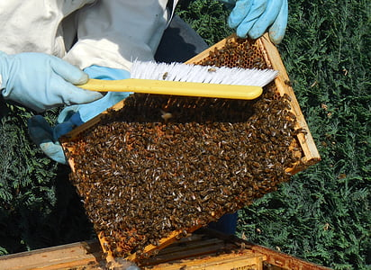 medium wall, bees, hive, honey, beekeeper, work, prey