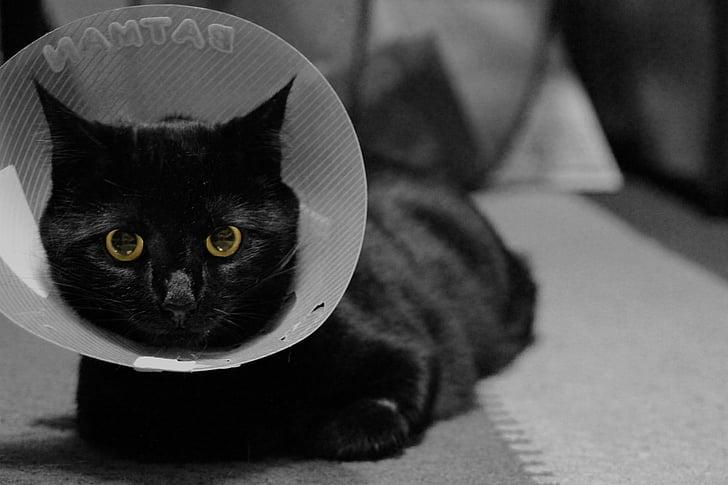 cat, feline, black cat, cone, collar, elizabethan collar, pets