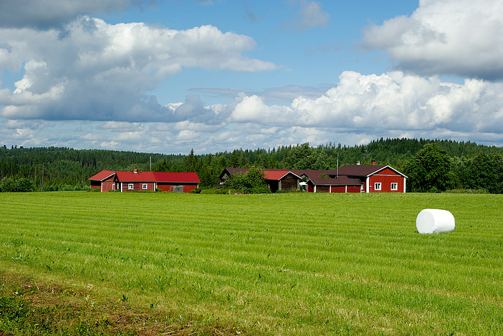 Phần Lan, Trang trại, rừng, cỏ khô