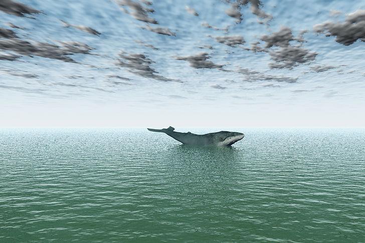 havet, Ocean, vatten, Whale, simma, däggdjur, stora