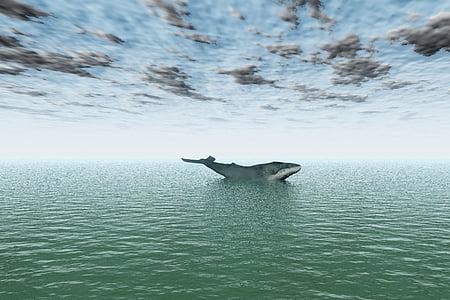 jūra, okeāns, ūdens, valis, peldēšana, zīdītāju, liels