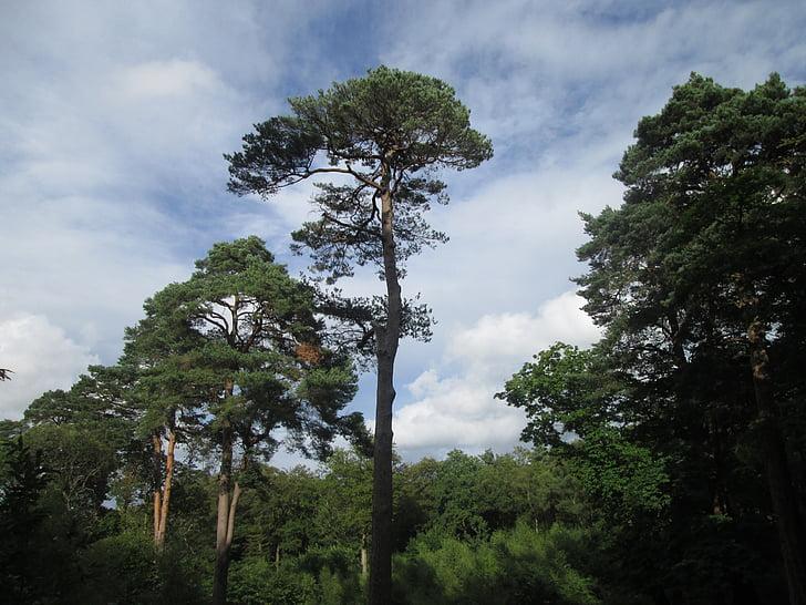 strom, Príroda, prírodné, Zelená, charakter prostredia, životné prostredie, rastlín