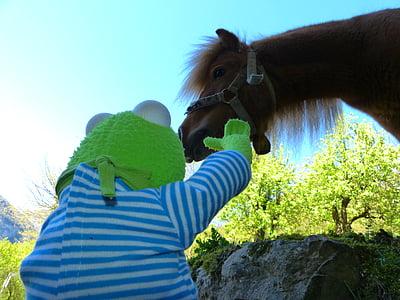cavall, poni, animal, wuschelig, cabellera, pelatge, Niça