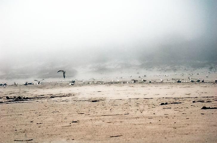walls, galicia, sea, seagulls, beach, fog, birds