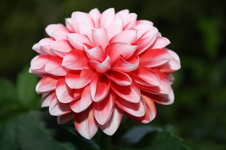 цветок, Лето, Летом растение