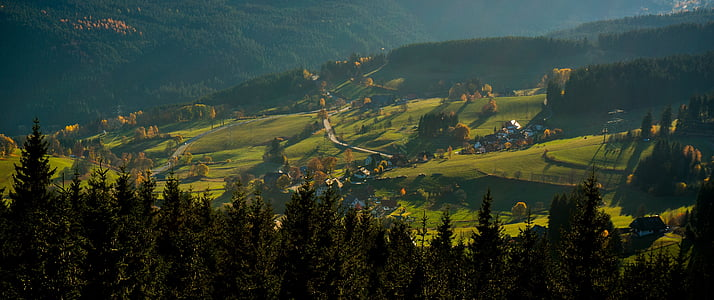 black forest, firs, autumn, landscape, nature, forest, view
