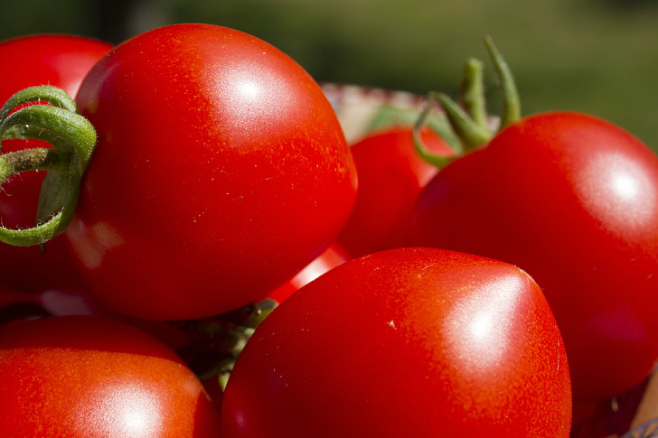tomàquets, verdures, vermell, madures, produir, Orgànica, jardí