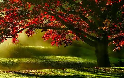 landscape, mists, tree, morning, scenic, meadow, green