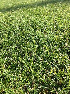 tráva, pole, Zelená, Príroda, trávnik, Záhrada, jar