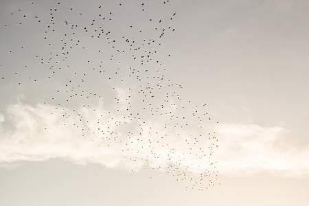 ocells, ramat, volant, cel