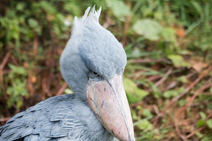 nil beak-in-hoof, bird, blue, animals, blue bird, wader, beak