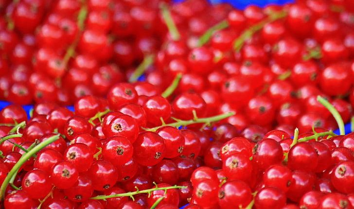 currants, red currants, fruit, soft fruit, berries, garden, sour