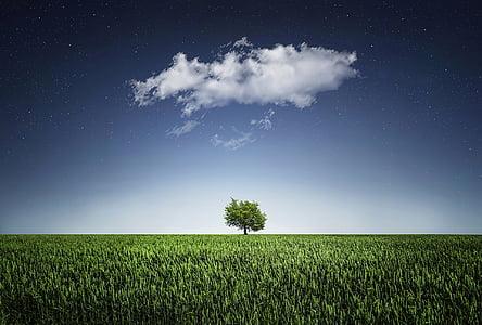 arbre, Natur, NightSky que, núvol, estrelles, camp, paisatge