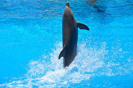 dupin, plivati, vode, plava, skok, Kako, dupinarija