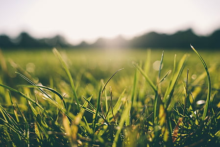 hierba, Mañana, Rocío, naturaleza, verde, verano, primavera
