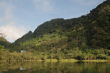 bosc, paisatge, paisatge de bosc, fons natural, bell paisatge