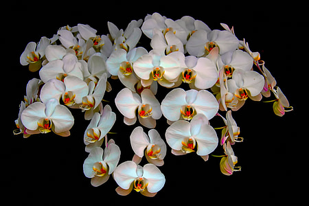 orchids, flower, nature, natural, floral