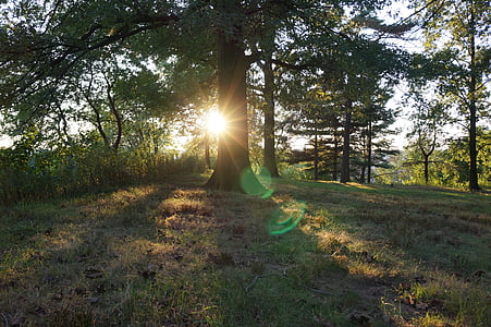 zonsondergang, bomen, Park, natuur, zon, hemel, boom