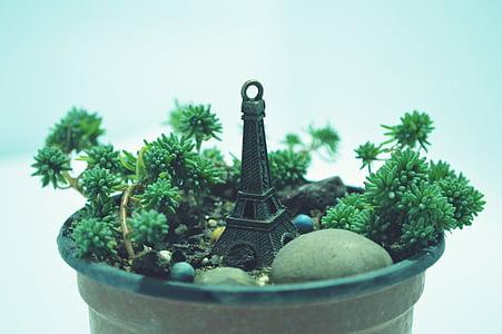 bodegons, plantes en test, llum